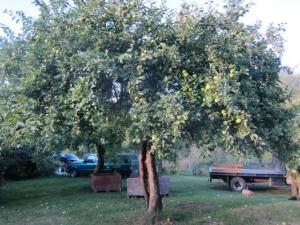 Eaglemount Tree 1