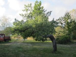 Eaglemount Tree 2